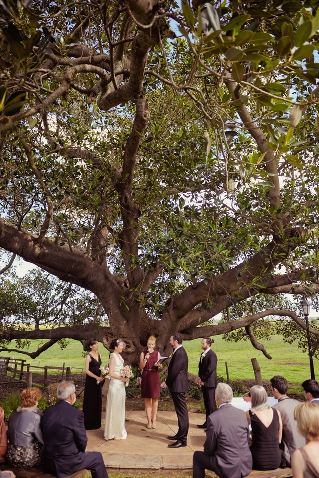 Married under a big ol' tree!